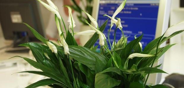 kwiaty w pracy