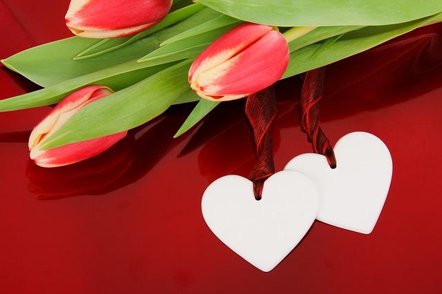 Tulipan / źródło: www.pixabay.com