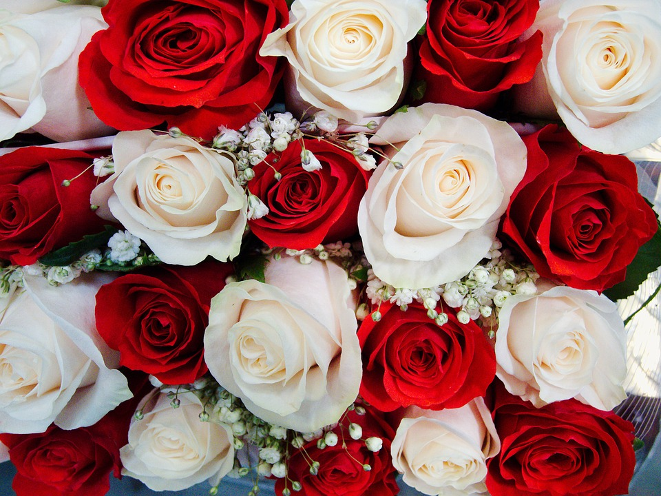 Mix róż / źródło: www.pixabay.com