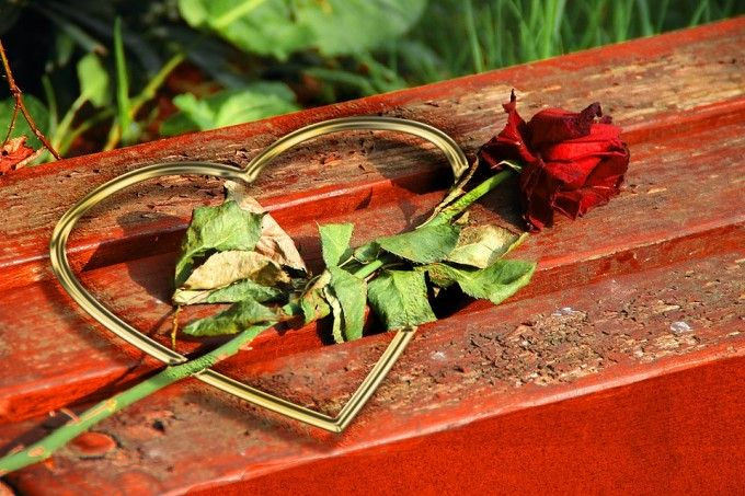 Róża symbolizuje miłość / źródło: www.pixabay.com