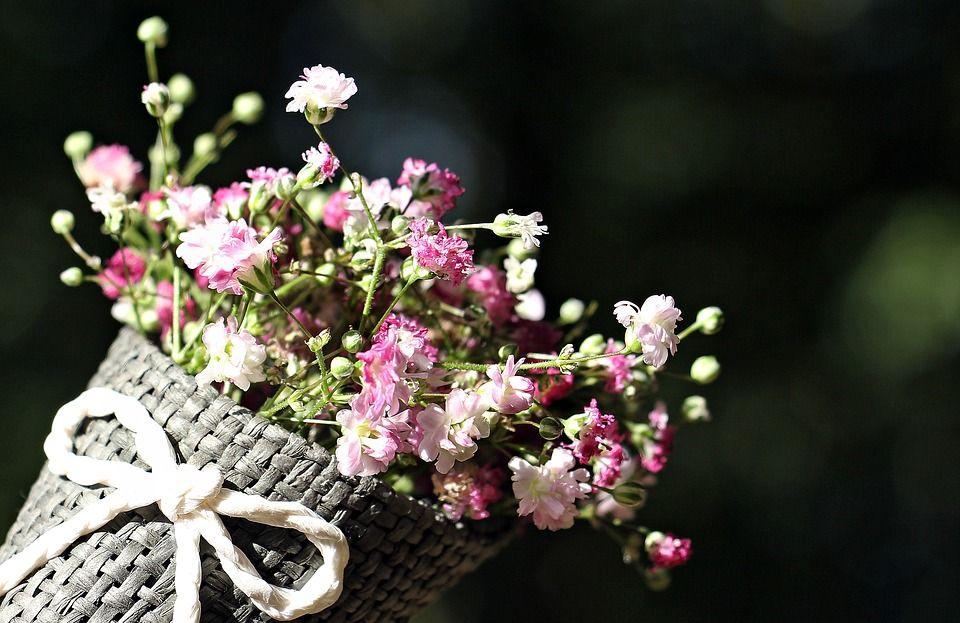 Kwiaty do sesji zdjęciowych - źródło: pixabay.com