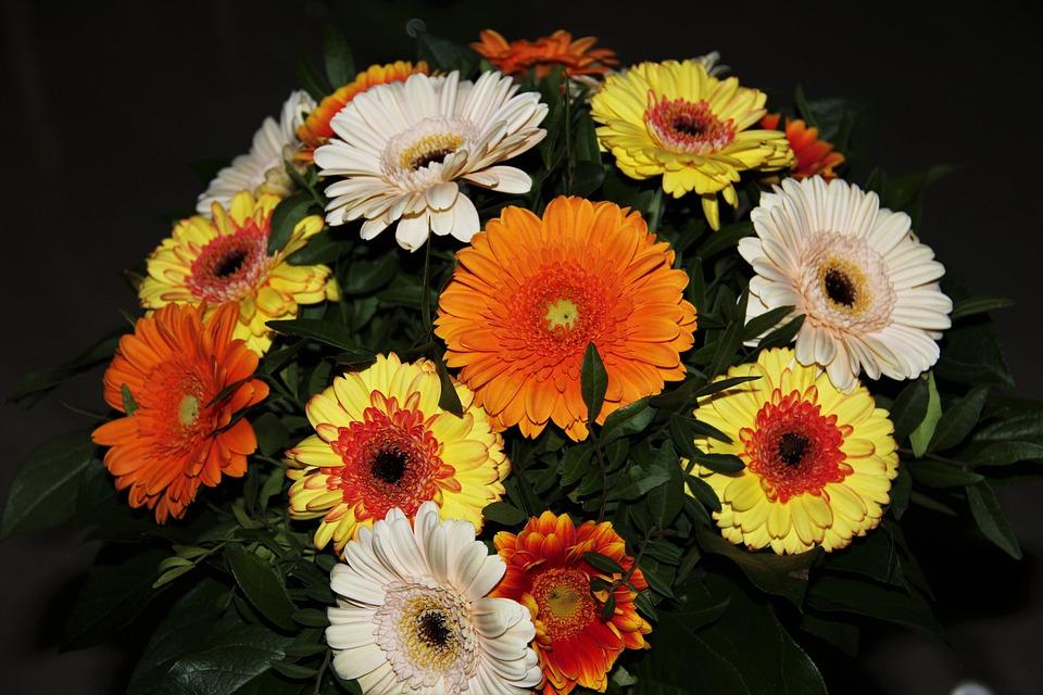 Jesienne kwiaty, źródło: pixabay.com