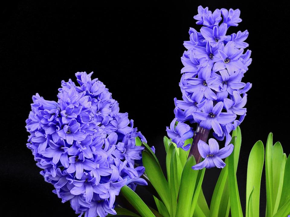 Kwiaty na ślub w lutym, źródło: pixabay.com