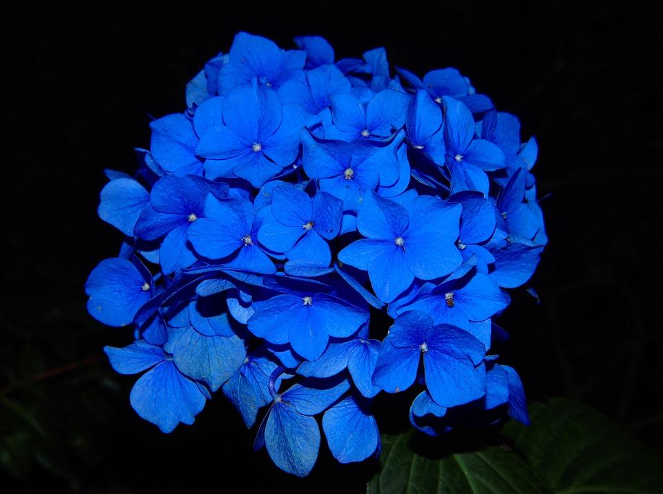 Kwiaty na ślub w czerwcu