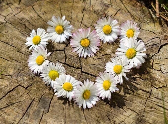 Ile wybrać kwiatów? / źródło: www.pixabay.com