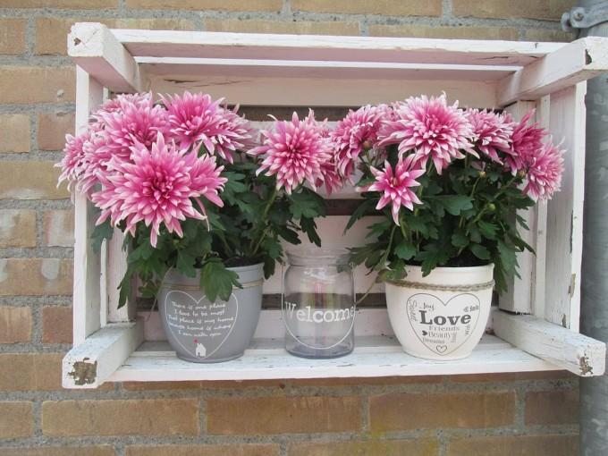 Kwiaty doniczkowe / źródło: www.pixabay.com