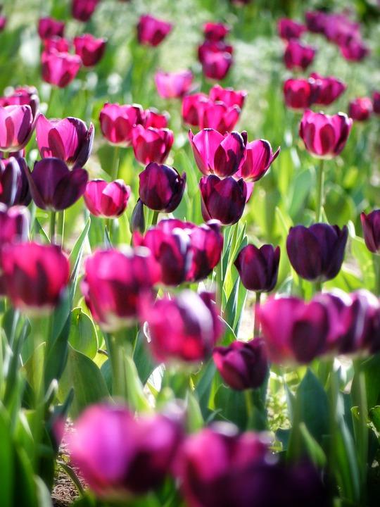 kwiaty firma