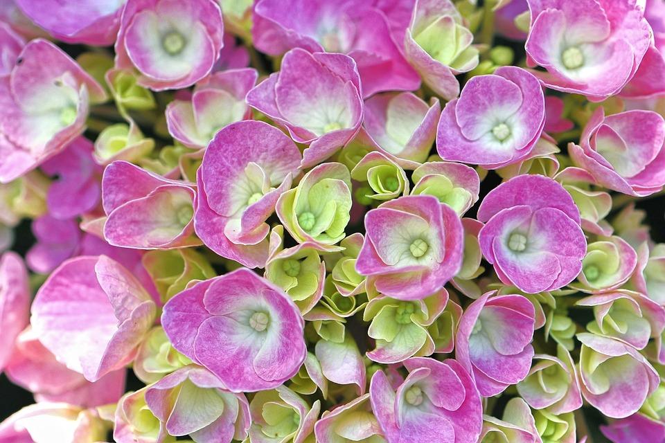 Wianki komunijne z żywych kwiatów