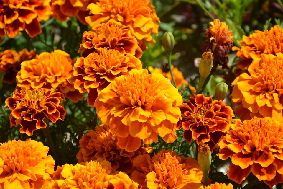 Kwiaty Na ślub W Październiku