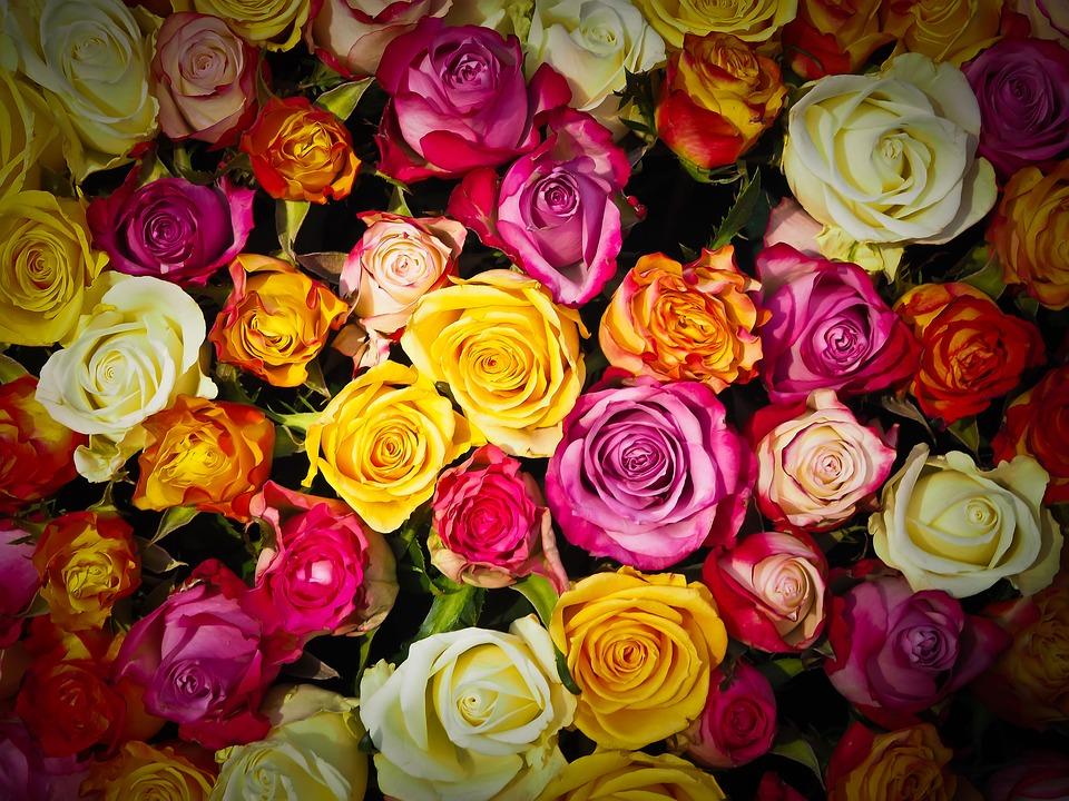 Kwiaty na przeprosiny