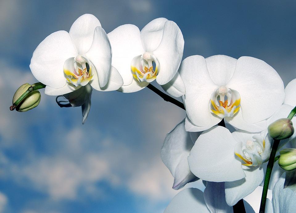 Kwiaty imieninowe